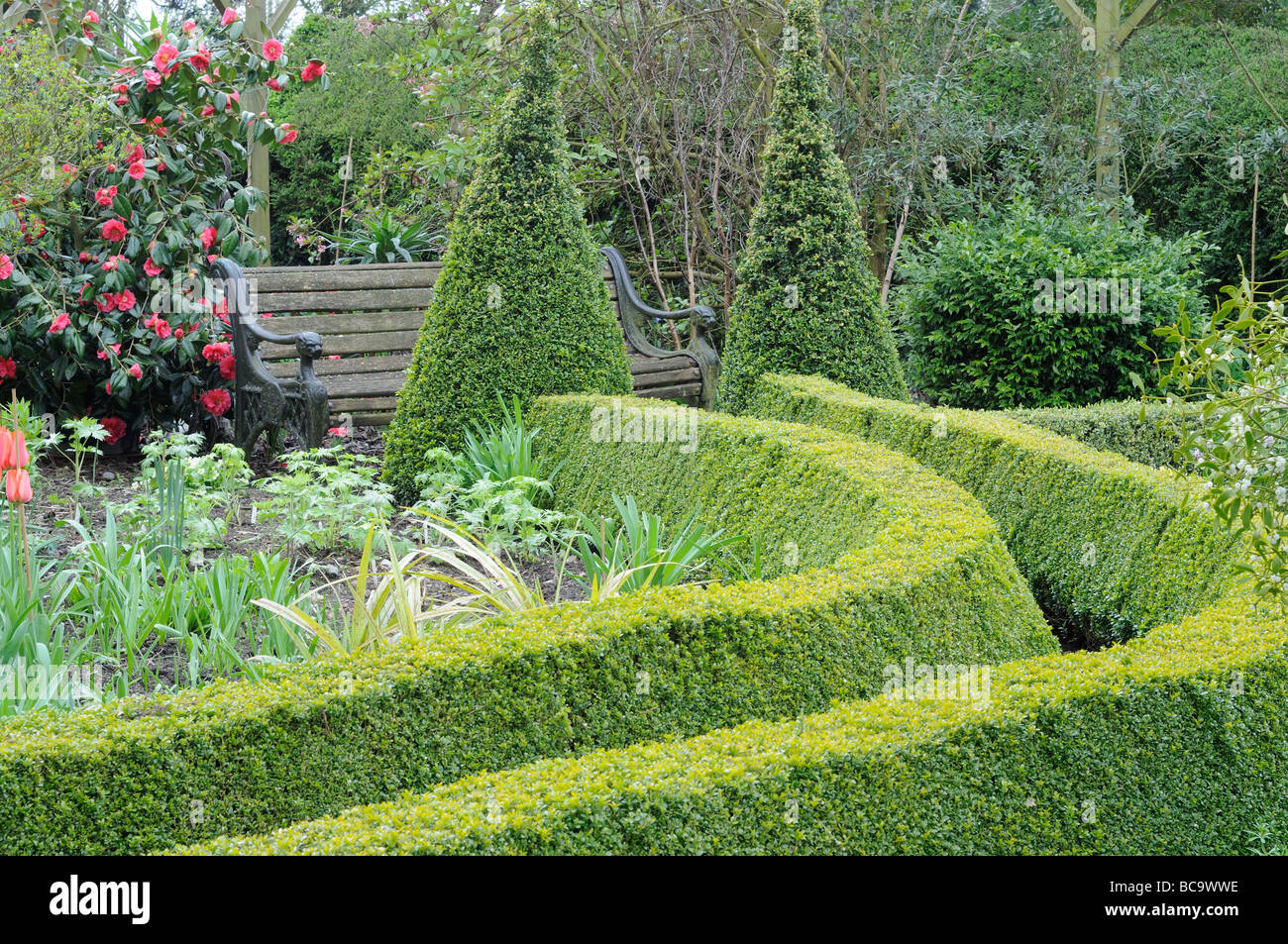 Path leading to garden seat path edged with trimmed box hedging in a springtime garden UK April - Stock Image