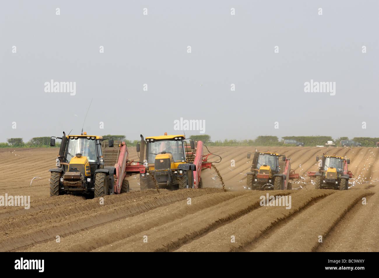 Mechanized potato baulking Norfolk UK April - Stock Image