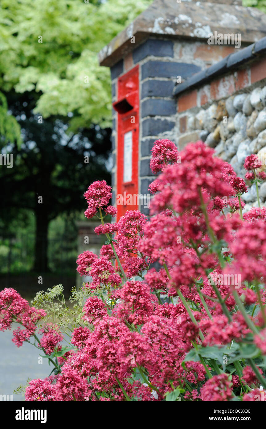 Traditional village postbox with roadside Red Valerian in foreground Norfolk UK June - Stock Image