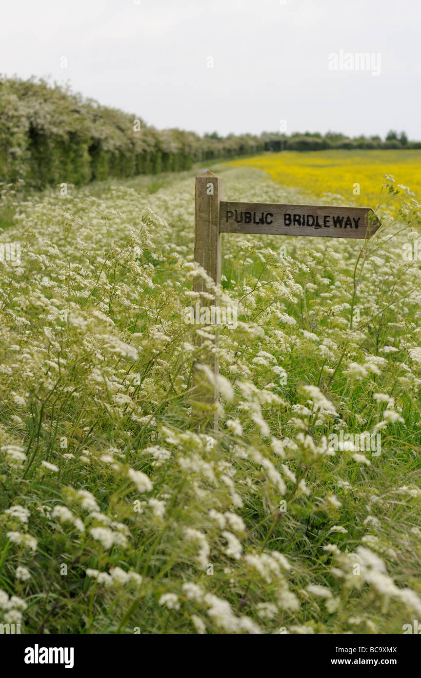 Public bridleway sign amongst hedge parsley on side of country road Norfolk UK May - Stock Image