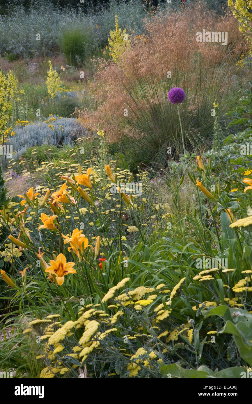 Prairie planting of perennials and grasses - Stock Image