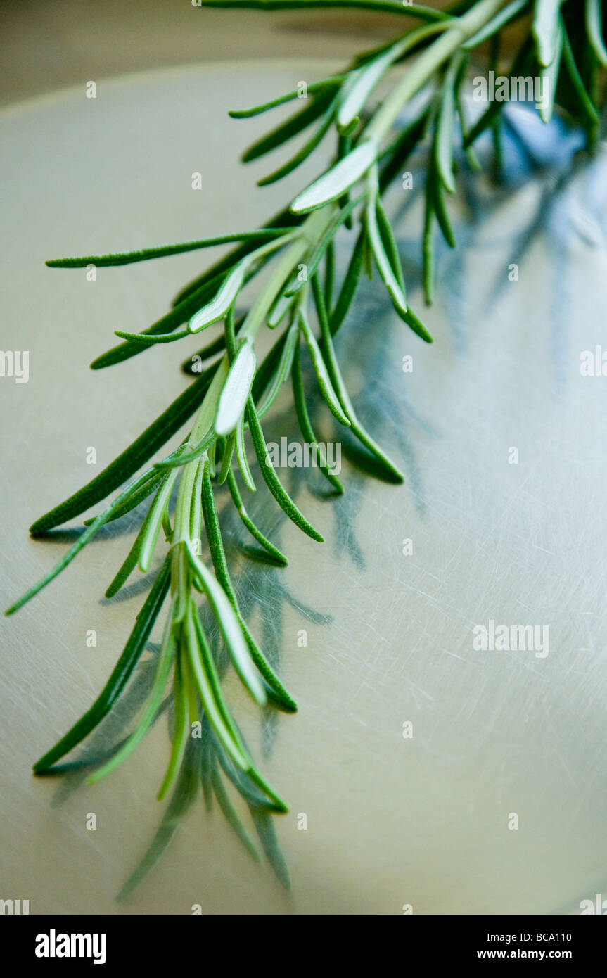 Sprig of Rosemary on a Stainless Steel Dish - Stock Image