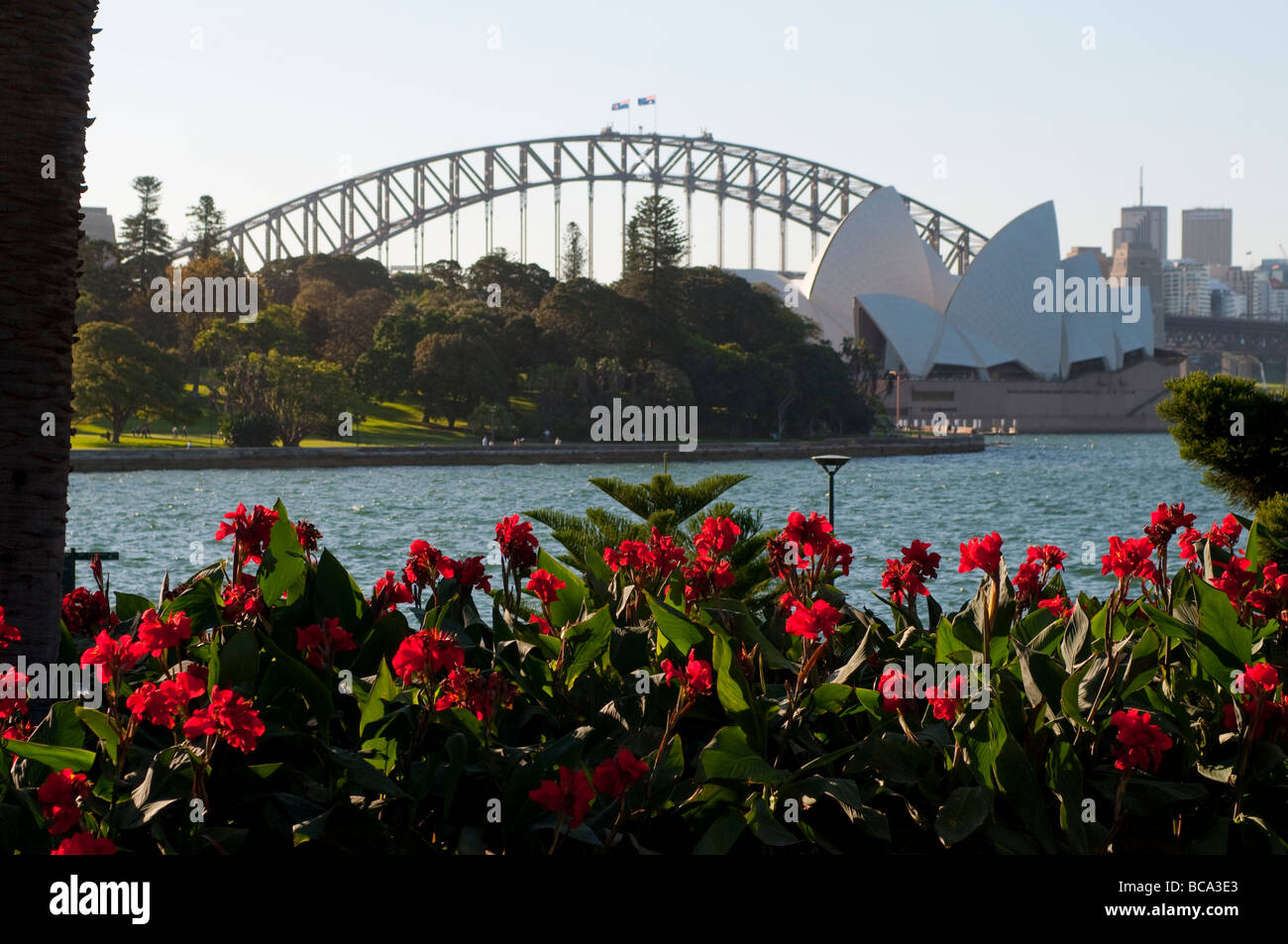 Harbour Bridge And Red Canna Flowers In Botanic Gardens, Sydney NSW  Australia