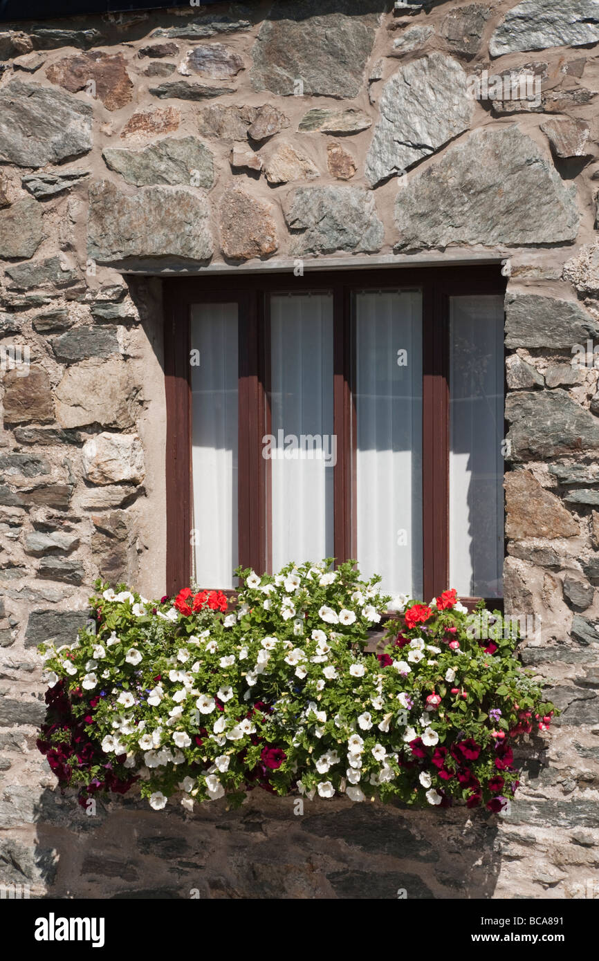 Flowers in a window box outside a stone building. Wales UK Britain - Stock Image