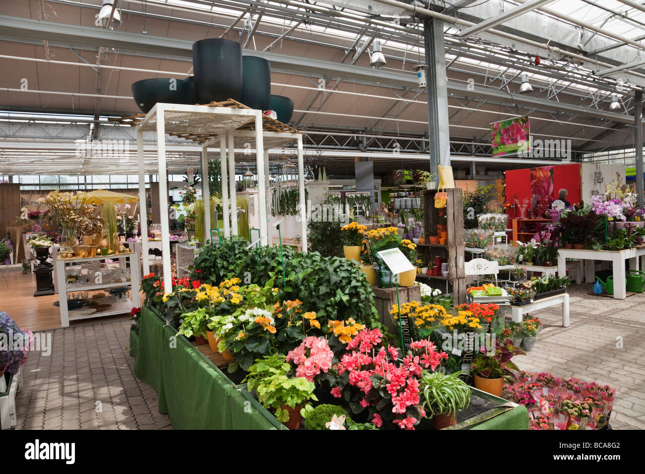 Europe Flowering pot plants on display inside a garden centre - Stock Image