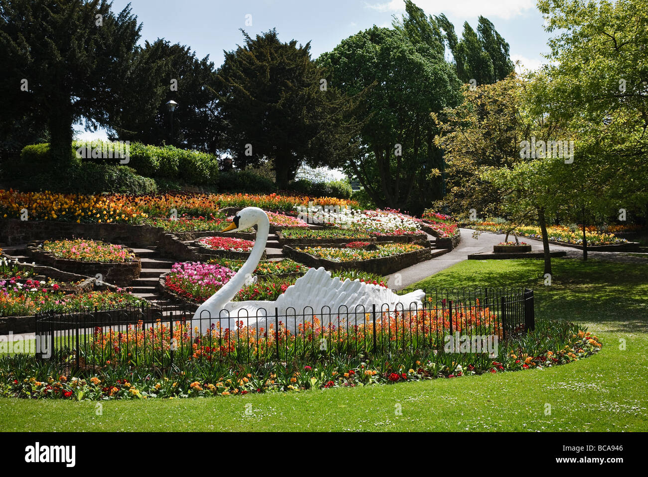 Floral display and the famous swan in Stapenhill Gardens, Burton upon Trent, Staffordshire - Stock Image