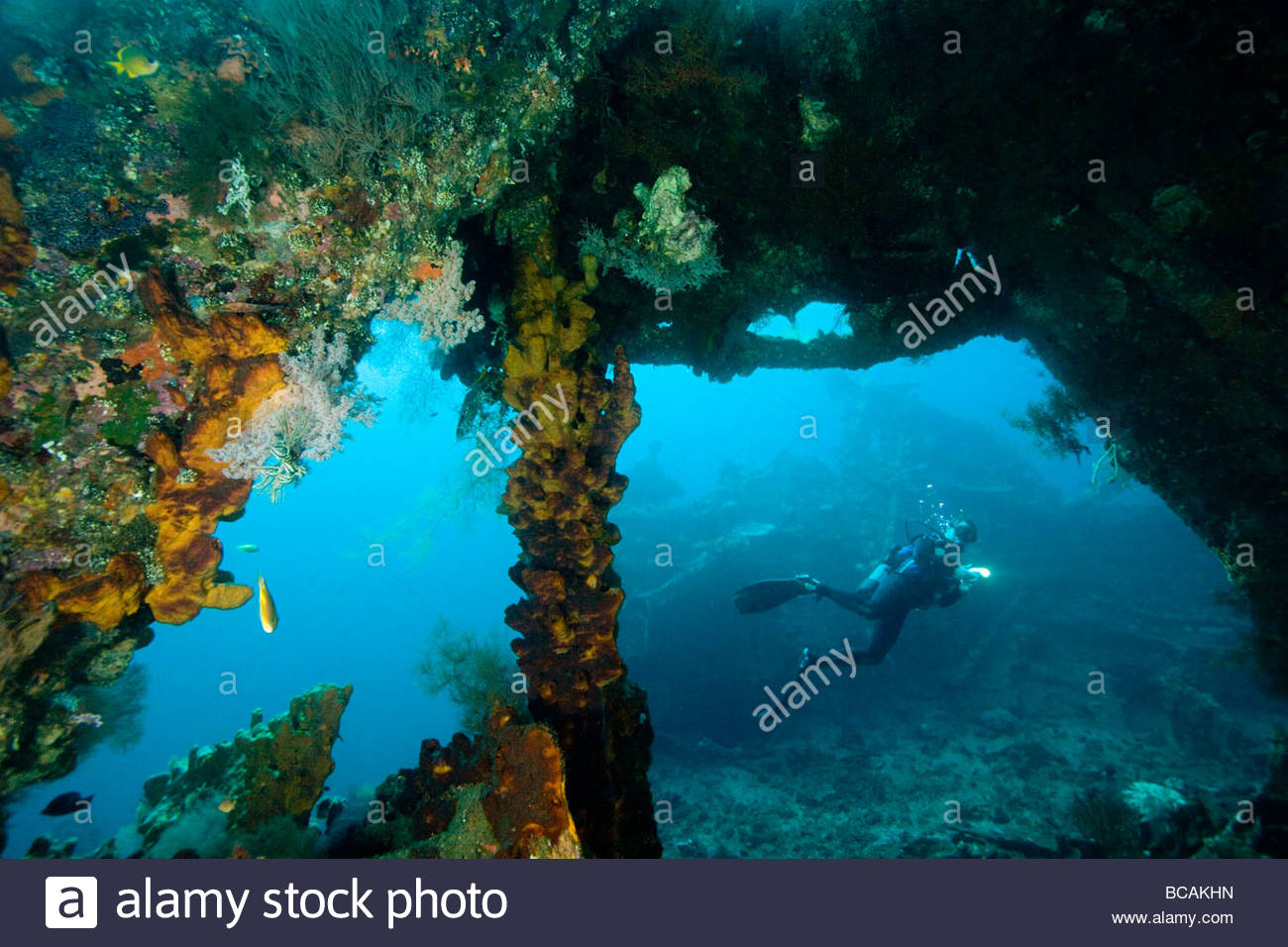 Diving on wreck of the ship 'Liberty', sunk by Japenese in 1942. - Stock Image