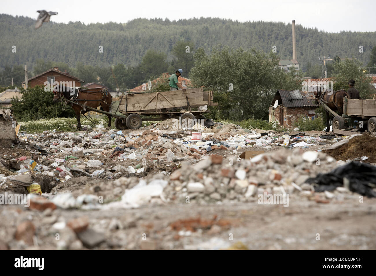 Scavenging for rubbish using a horse and cart Samokov Bulgaria - Stock Image