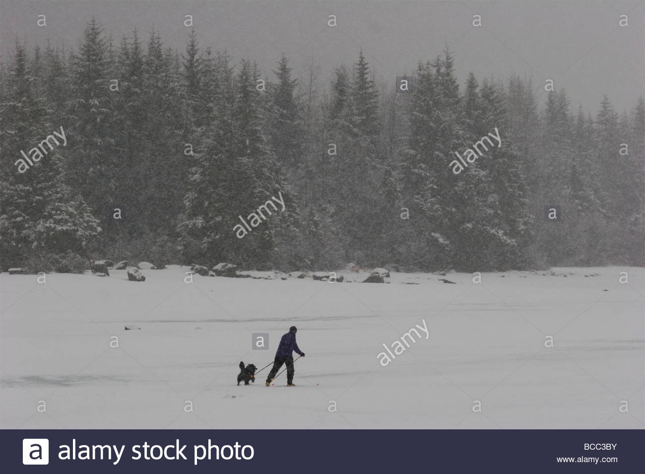 Cross country skiing with a dog on Mendenhall Lake. - Stock Image
