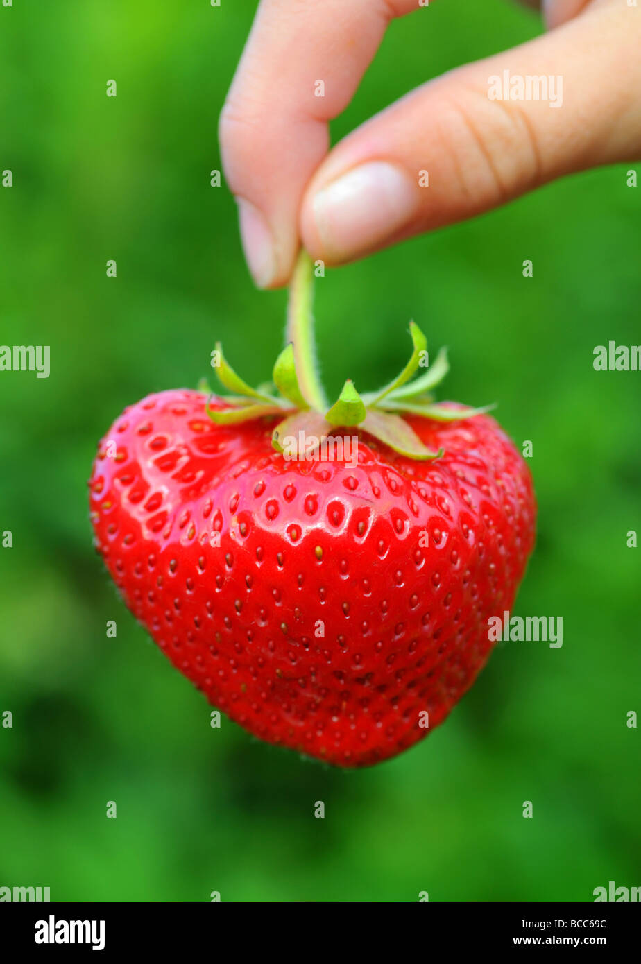 Strawberry, strawberries Stock Photo