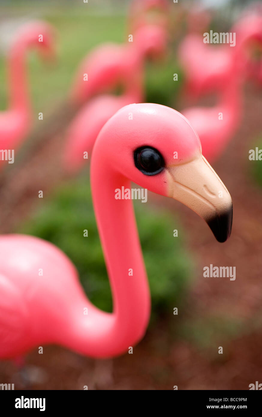 A flock of plastic pink flamingo decorate a lawn. - Stock Image