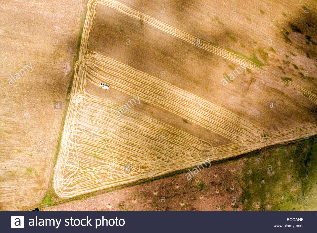 Corn is harvested with combines in the agricultural lands near Eldoret Stock Photo