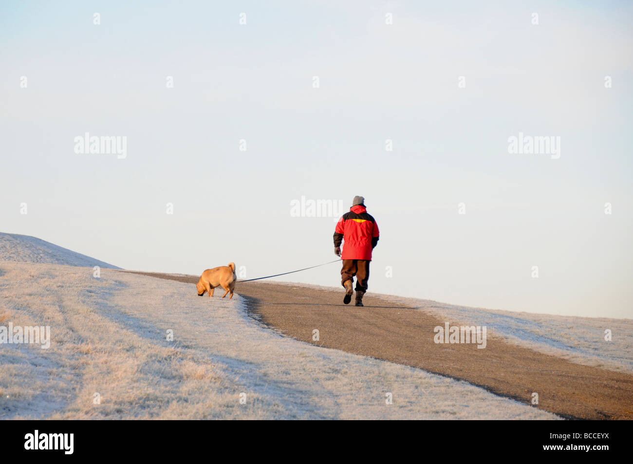 Dog walker, Frost scene in winter, England - Stock Image