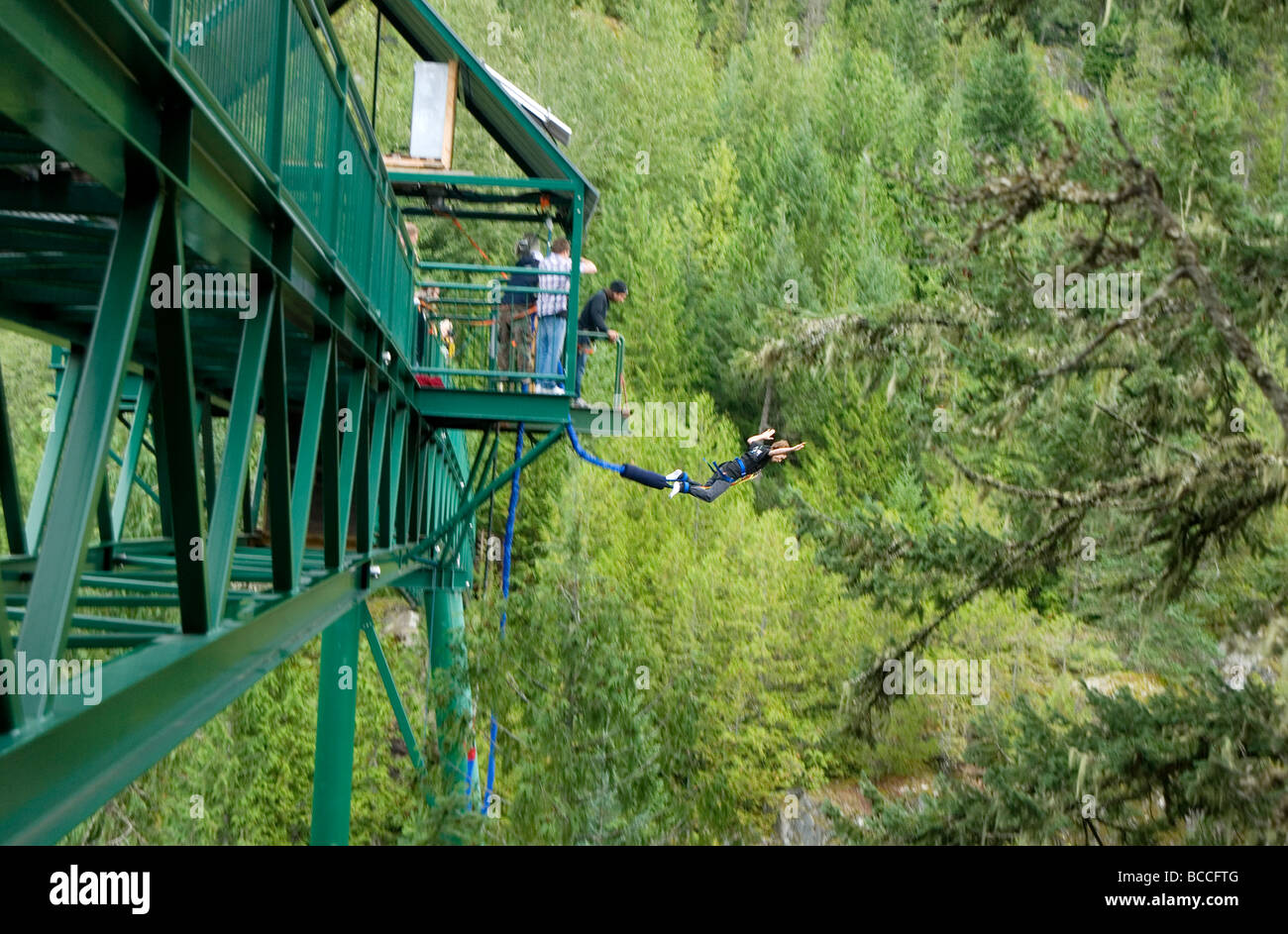 Person in mid-air bungee jumping from bridge at Whistler, British Columbia, Canada - Stock Image