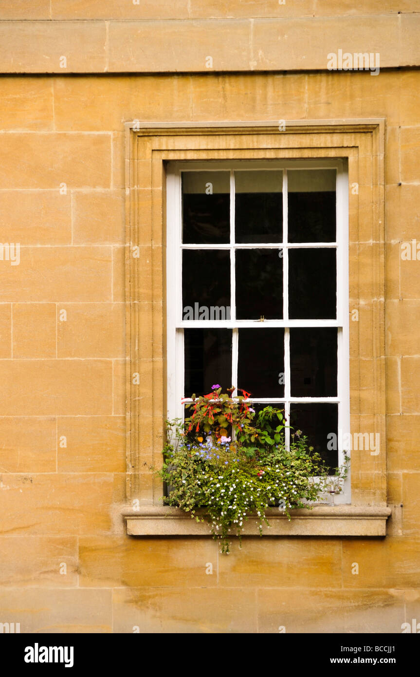 window with flowers box colorful - Stock Image