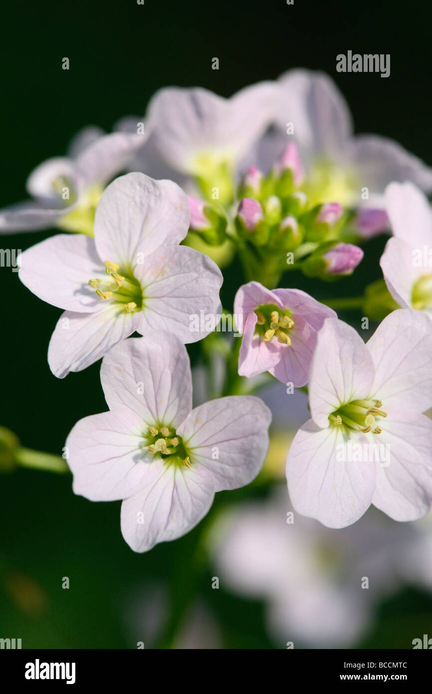 a taste of spring wood anemones fine art photography Jane Ann Butler Photography JABP461 - Stock Image