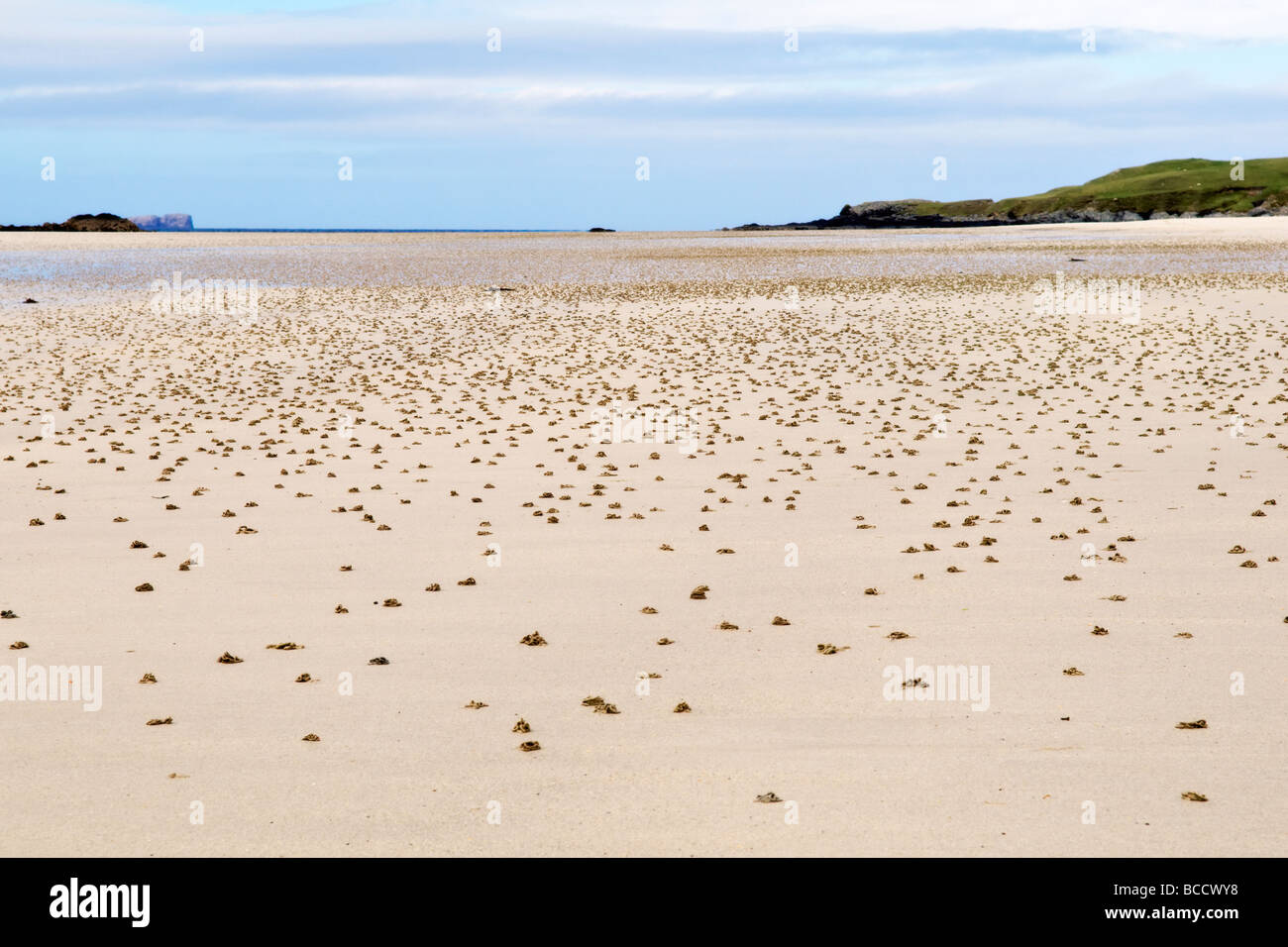 Sandy uk beach at Balnakeil Bay Scotland covered in lugworm sand casts taken in Spring time - Stock Image