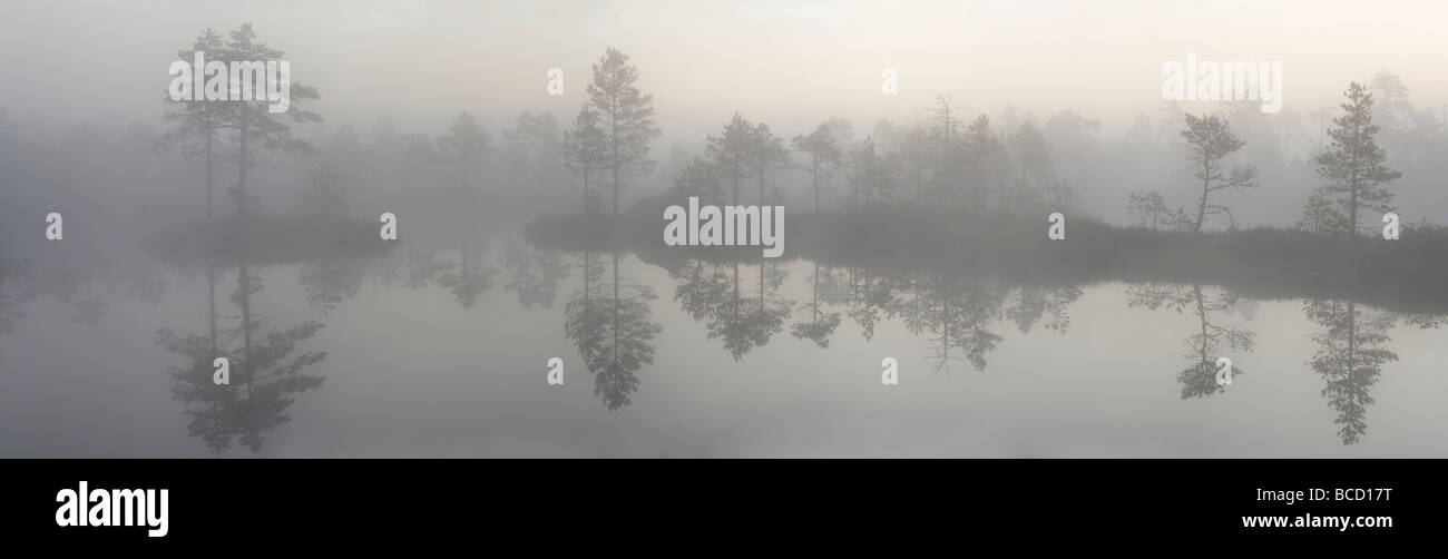 Bog pool in the mist. Põrdasoo Bog. Lower-Pedja Nature Reserve. Estonia - Stock Image