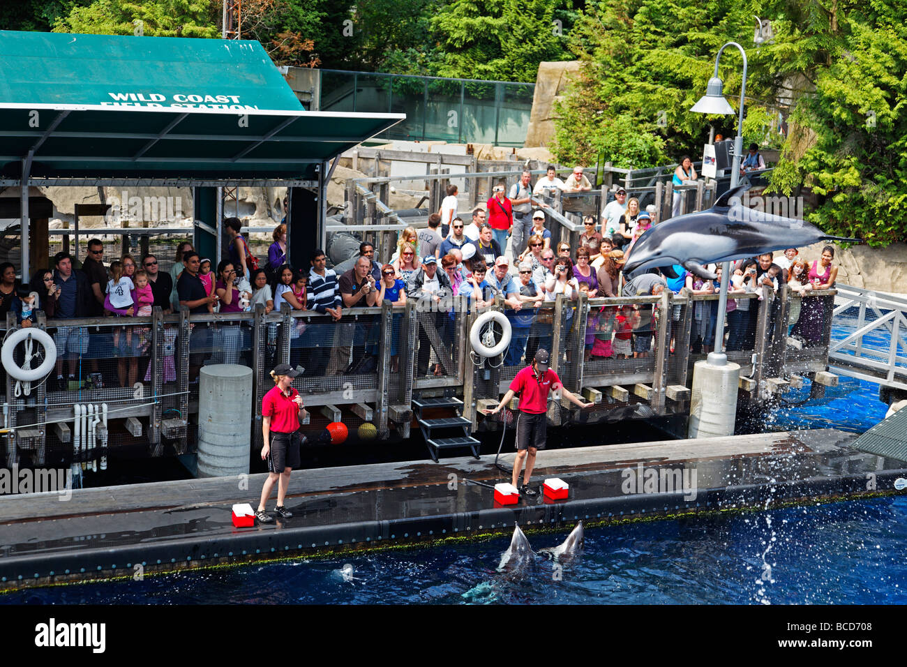 Dolphin show in Aquarium in Vancouver City Stanley Park Canada North America - Stock Image