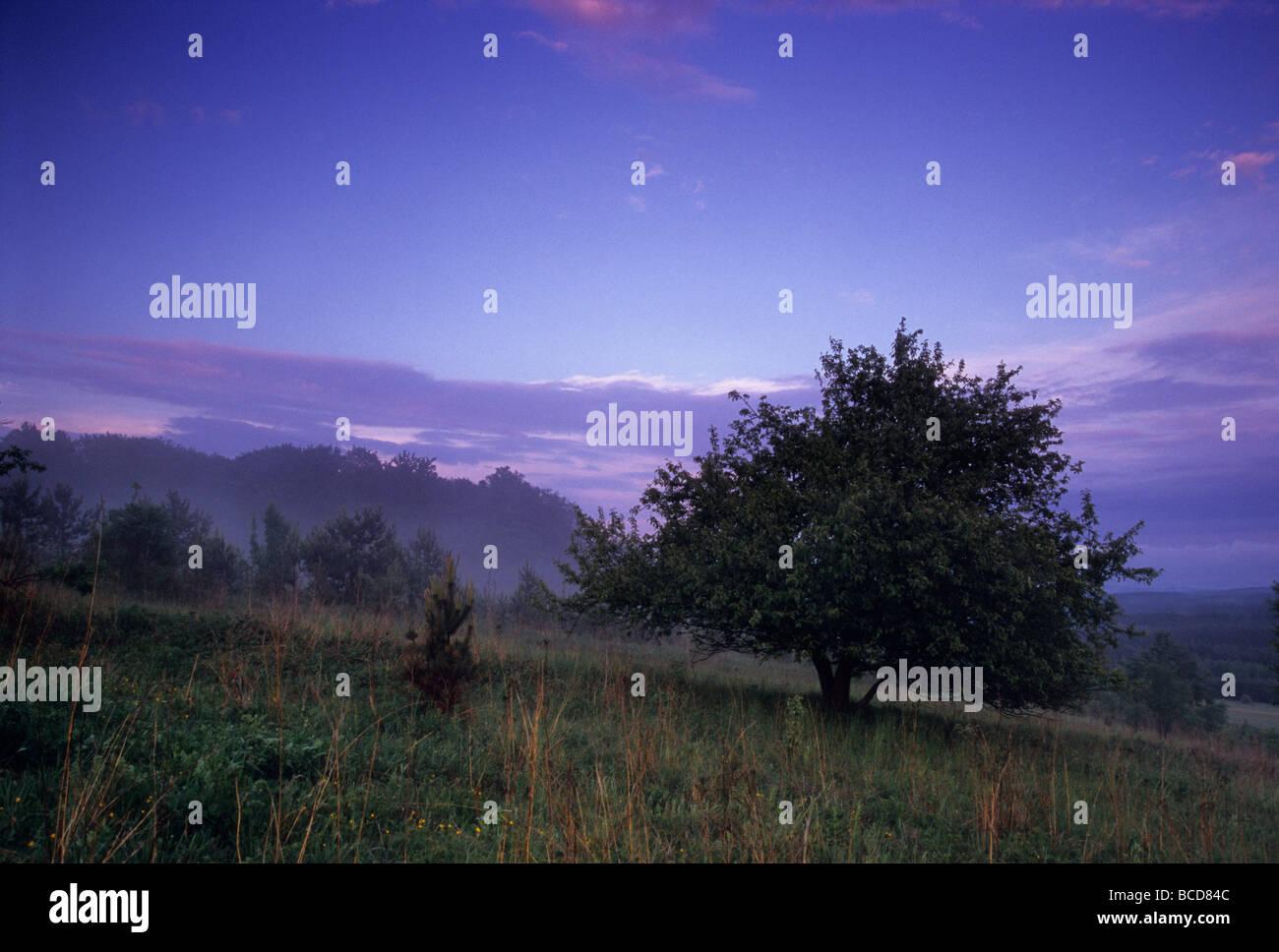 night wood edge sky Stock Photo