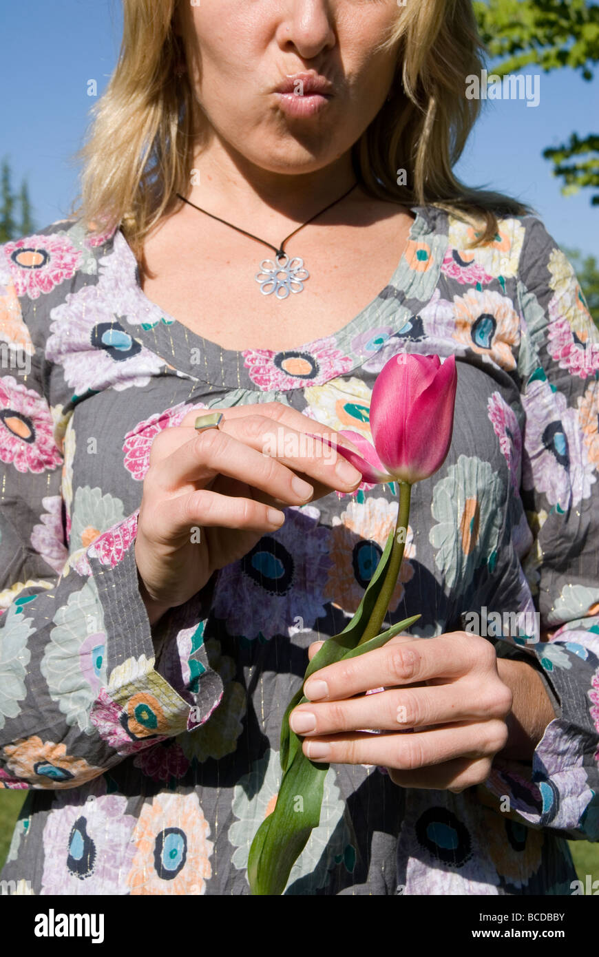 Partial view of woman ripping petals off of tulip - Stock Image