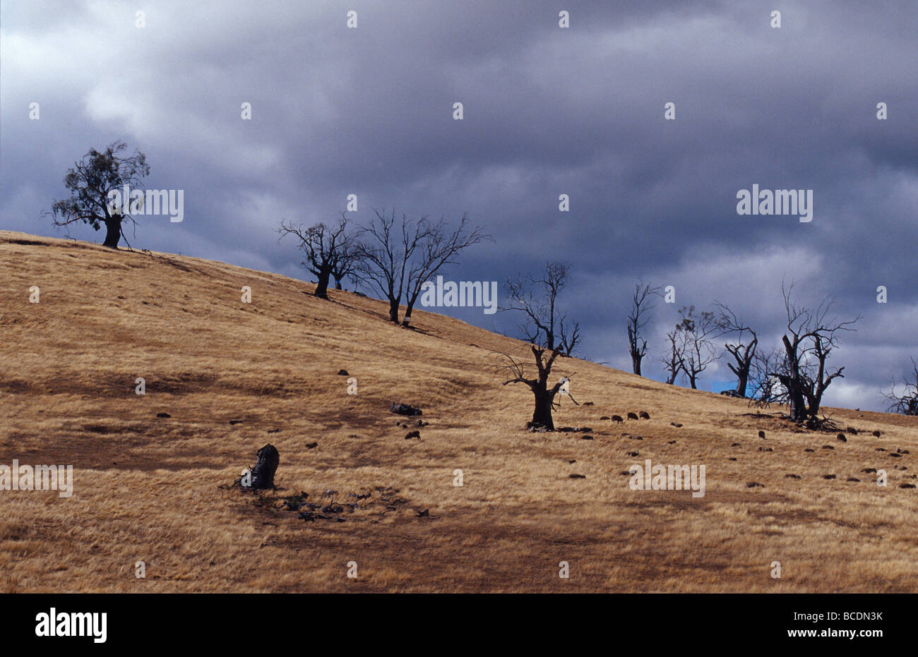 Farmland destroyed by drought, over grazing and erosion. - Stock Image