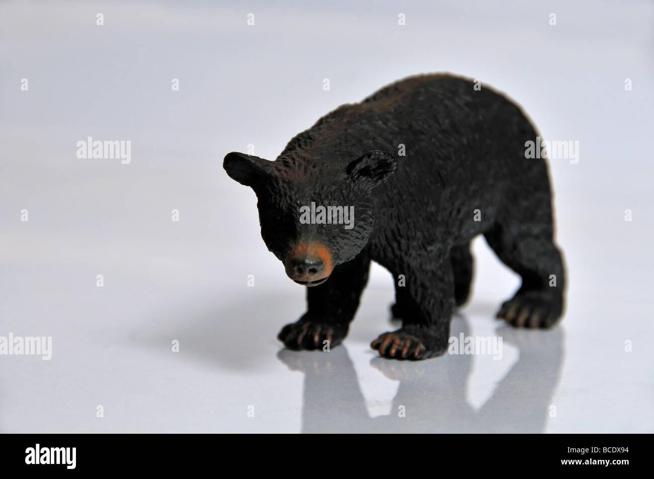 Balck bear on a reflective surface. Studio photo - Stock Image