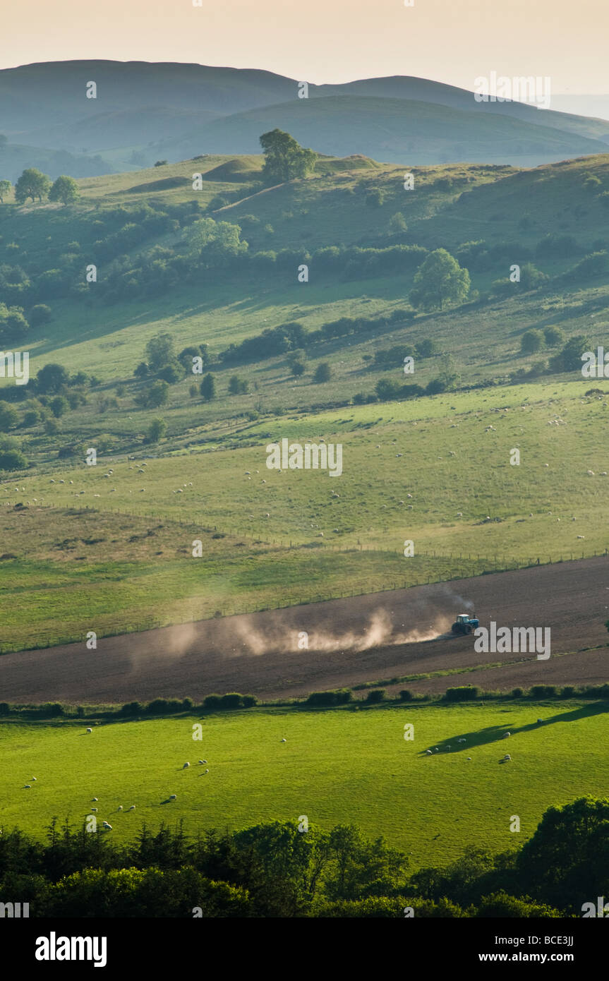 A Tractor working in a field Summer evening Rural landscape mid powys wales UK - Stock Image
