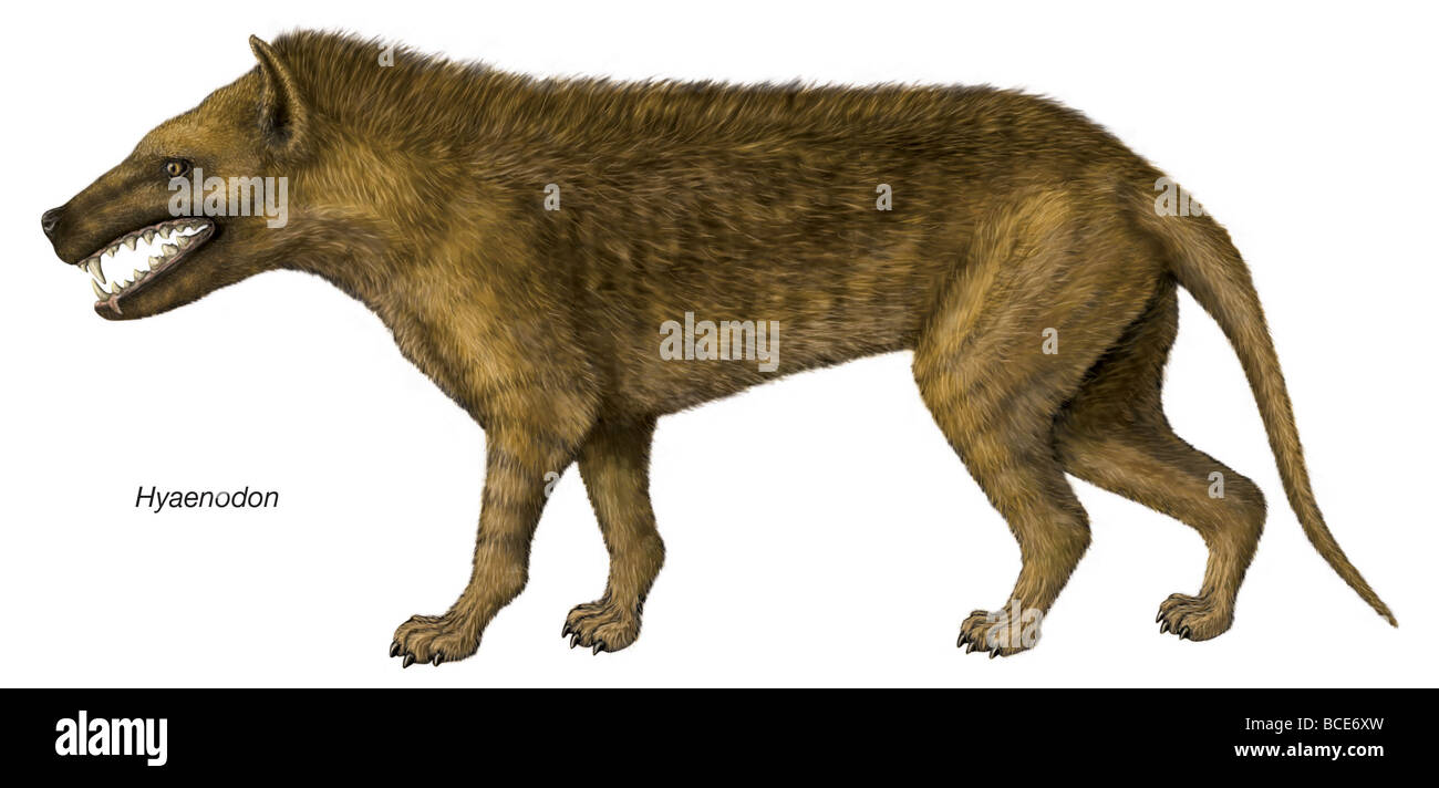 Depiction of the extinct genus Hyaenodon. - Stock Image