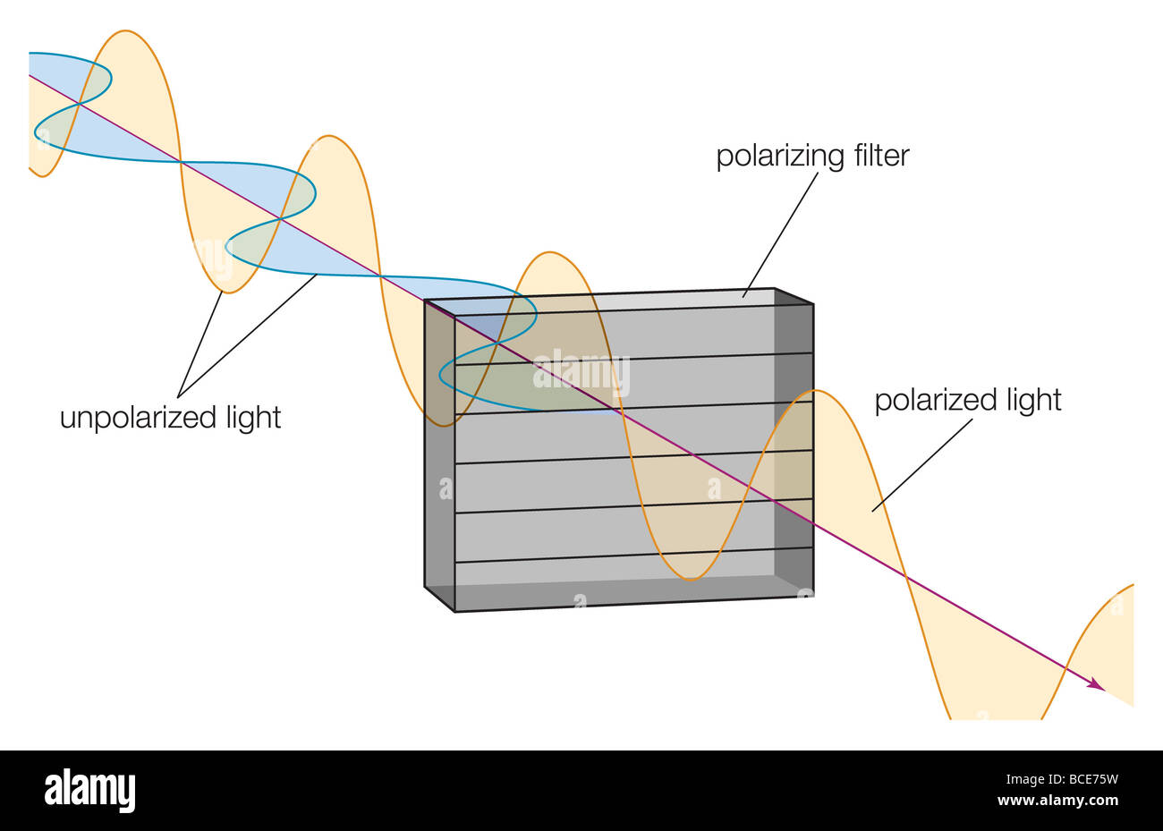 Light Waves Matching The Orientation Of Molecules A Polarizing Filter Are Absorbed Reducing Intensity