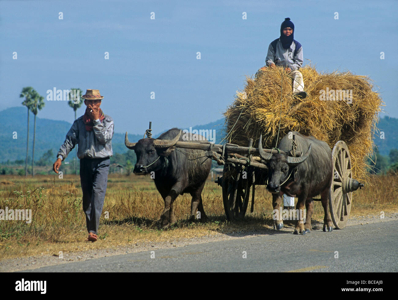 2374 Isaan People with Water buffalo cart North East Thailand