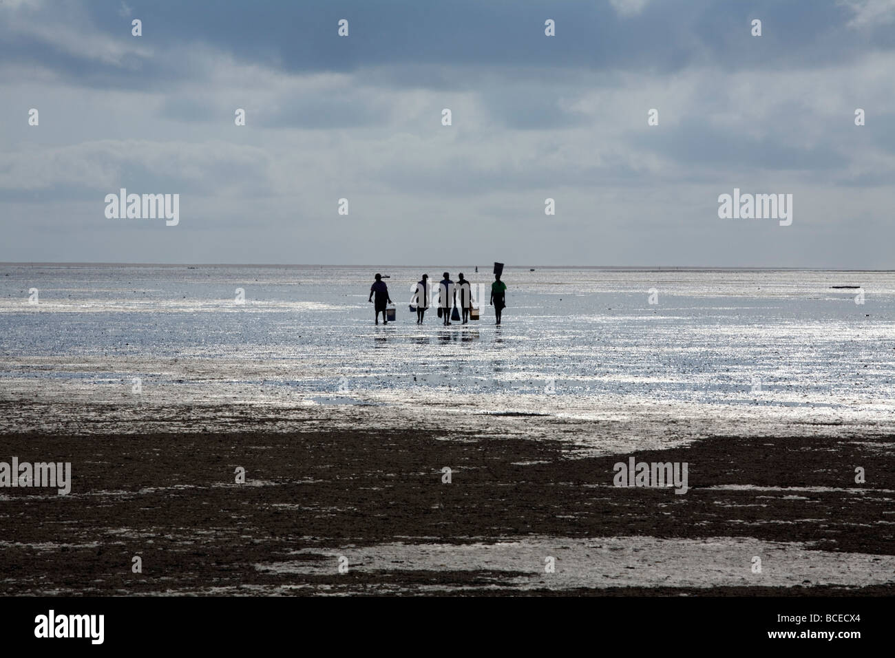 Mozambique, Inhaca Island. Local ladies carry their clam catch in the early morning at low tide on the beach. Stock Photo