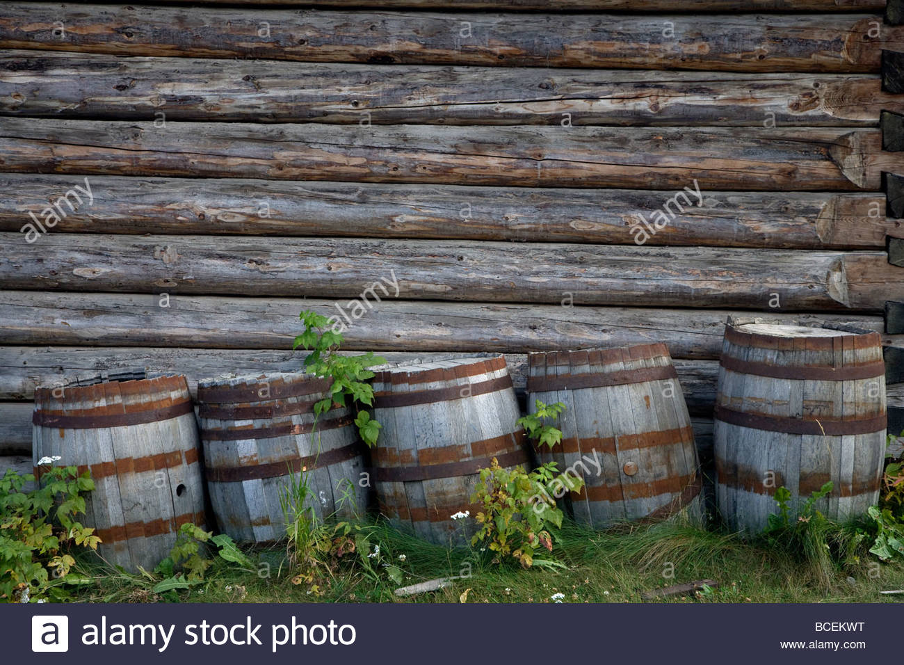 Old wooden moonshine barrels are stored against a wall of a log cabin. Stock Photo