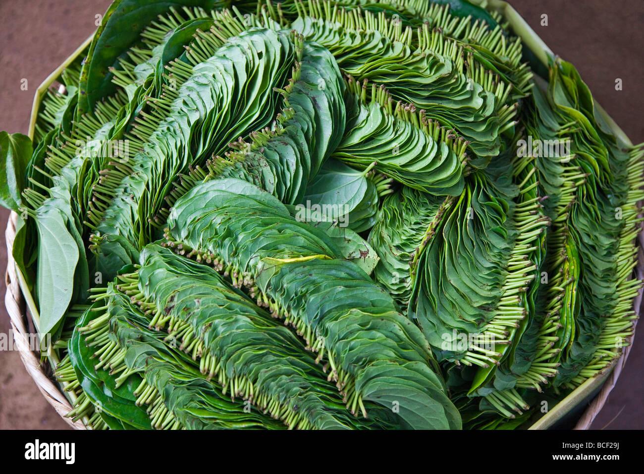 Myanmar, Burma, Lake Inle. Betel leaves carefully packed in a basket at Phaung Daw Oo market. - Stock Image
