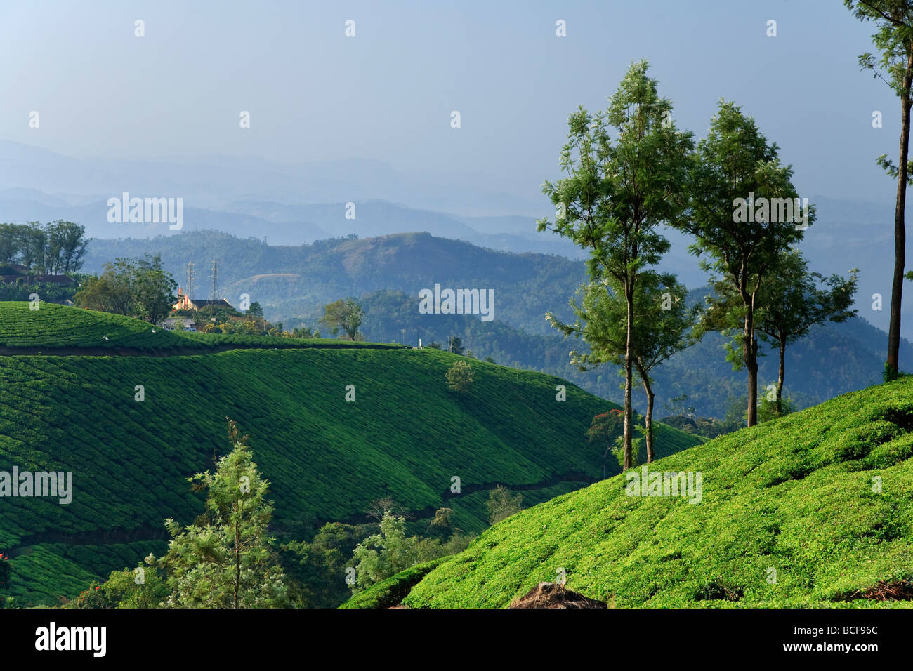 Tea Plantations, Munnar, Western Ghats, Kerala, India - Stock Image
