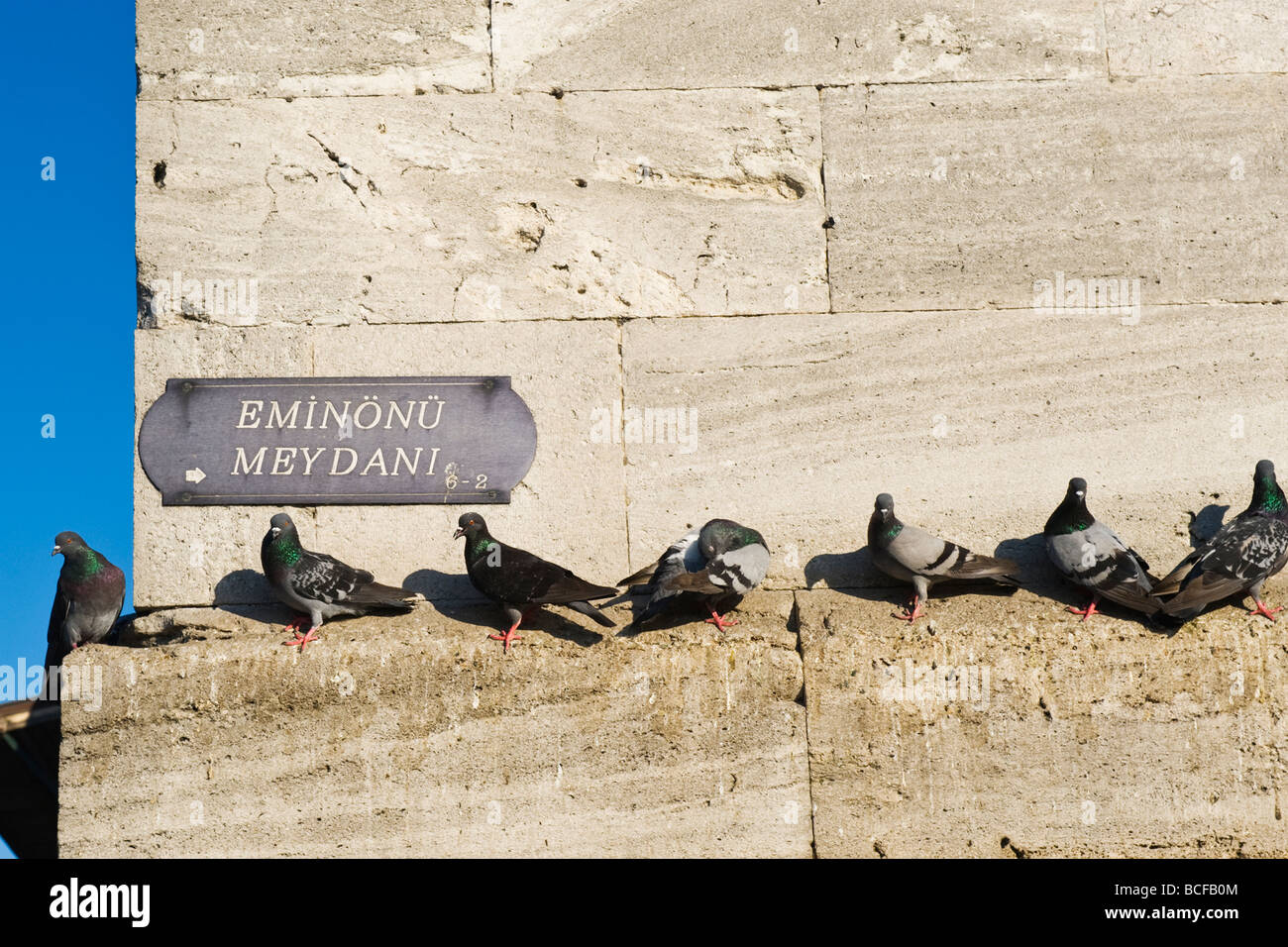 Turkey , Istanbul , Eminonu Meydani , New Mosque or Yeni Cami , pigeons perch on wall waiting for visitors to feed - Stock Image