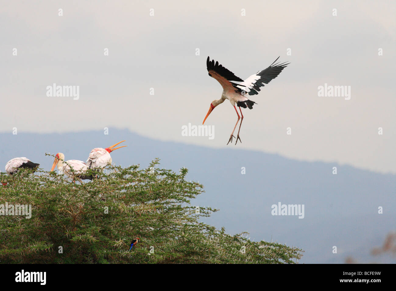 Stalks, Lake Manyara National Park, Tanzania - Stock Image