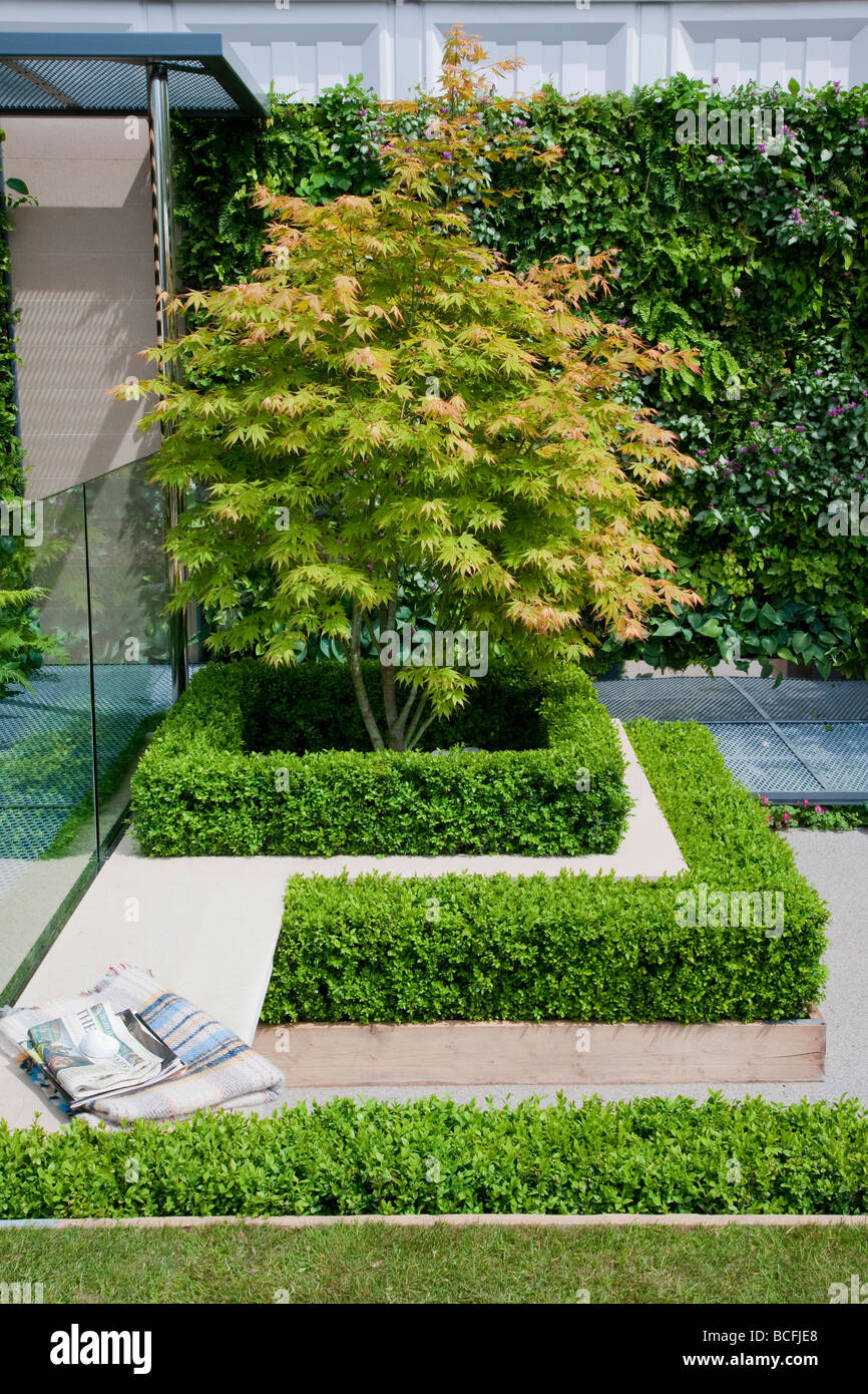 Multi level courtyard with Acer palmatum cultivar and geometric clipped box Buxus sempervirens surrounding - Stock Image