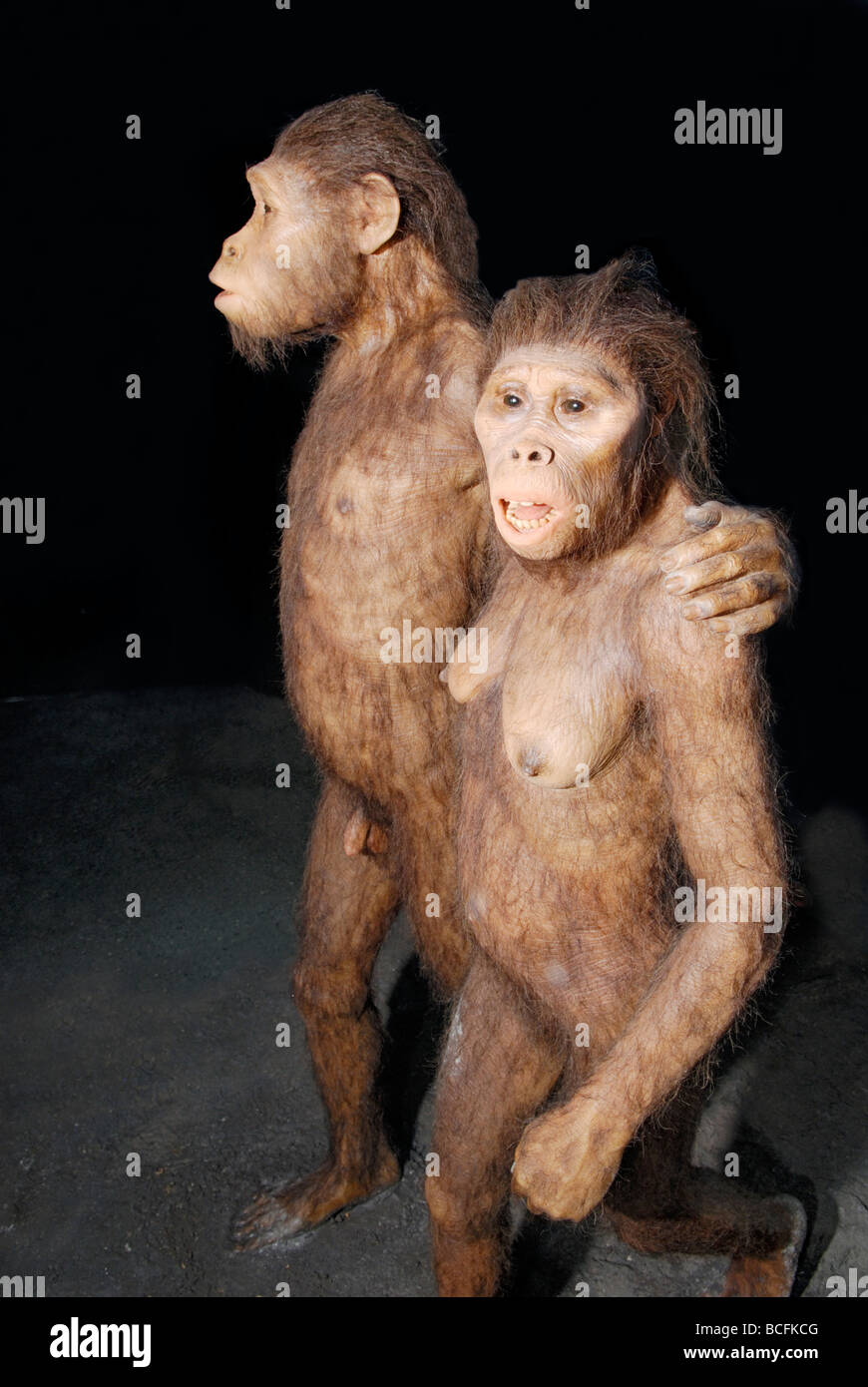 A rendition of two Australopithecines walking in volcanic ash 3.5 million years ago. - Stock Image