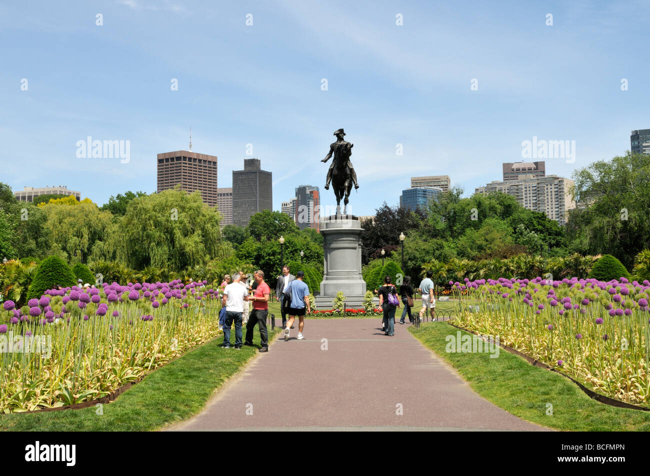 In the Public Gardens adjacent to Boston Common flowering Giant Alliums leading to statue of George Washington with - Stock Image