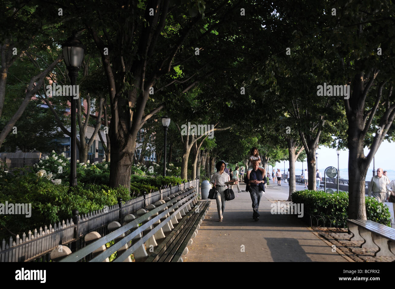 The esplanade in Battery Park City is shaded with linden trees that give off a heady fragrance when they flower - Stock Image