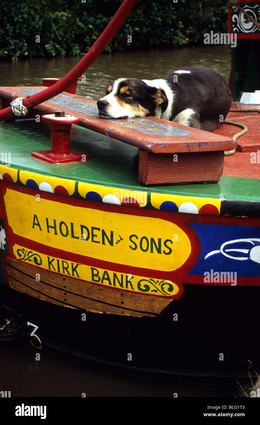 Lazy Dog Asleep On A Canal Barge In Middlewich Cheshire - Stock Image