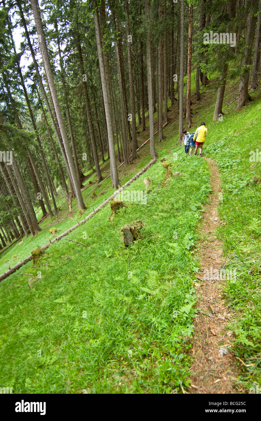 Mountain footpaths through the dense woodland on the Schmittenhohe in Austria. - Stock Image