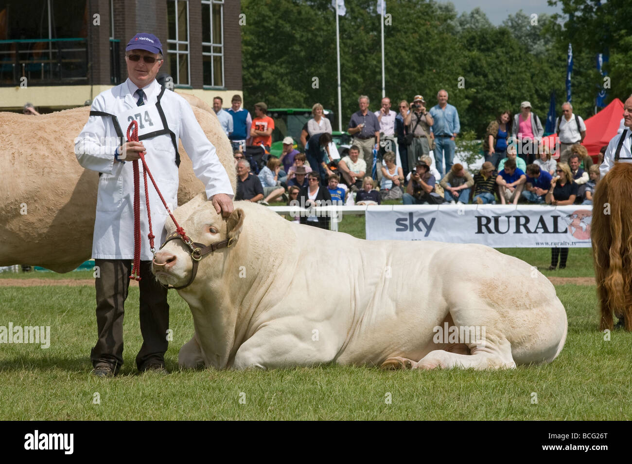 Stockman With His Bull At The Last Royal Show 2009 - Stock Image