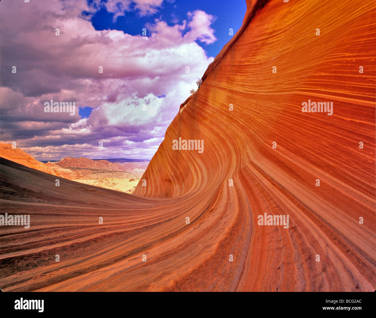 The Wave Vermillion Cliffs Wilderness Arizona - Stock Image