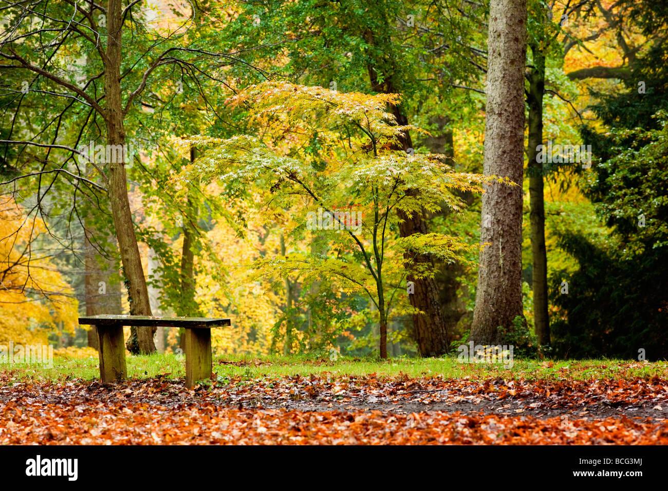 Autumn colours at Thorp Perrow Arboretum, Yorkshire UK - Stock Image