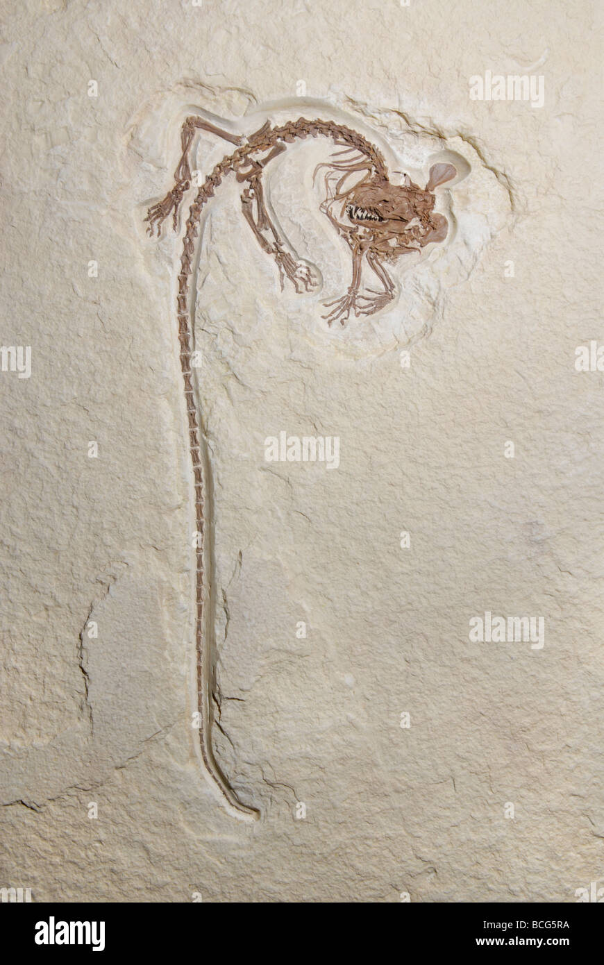 Mammal Fossil Stock Photos & Mammal Fossil Stock Images - Alamy