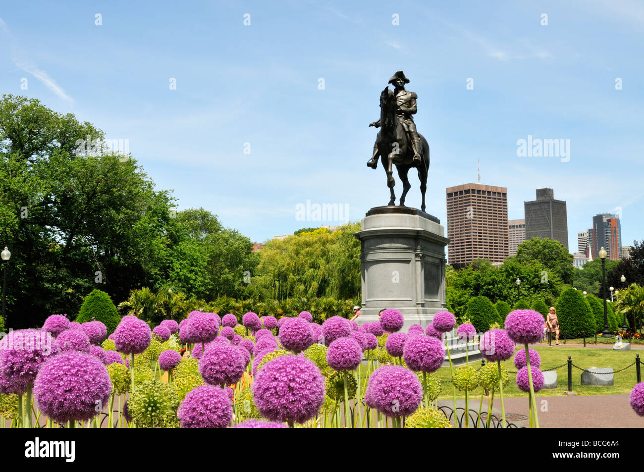 Statue of George Washington in the Public Gardens of Boston Common with Giant Allium in bloom and city skyline in - Stock Image
