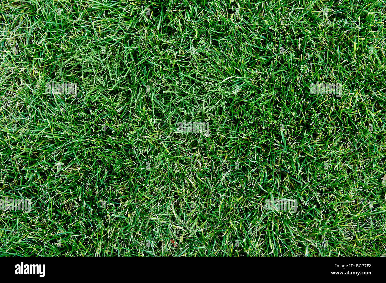 top view of fresh lawn grass - Stock Image