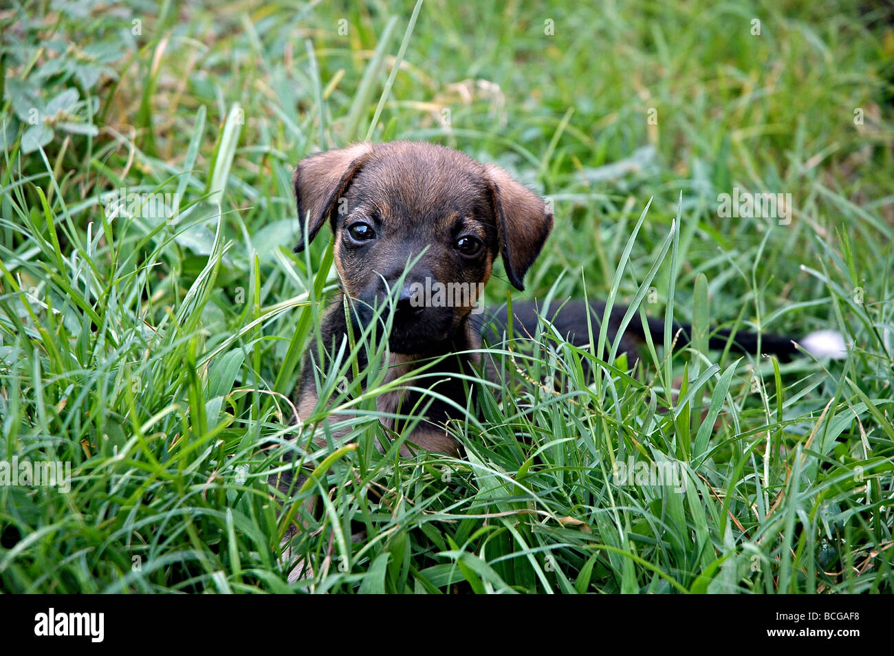Doggy looking at the camera. - Stock Image